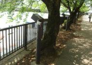 桜ノ宮公園公園灯設置工事